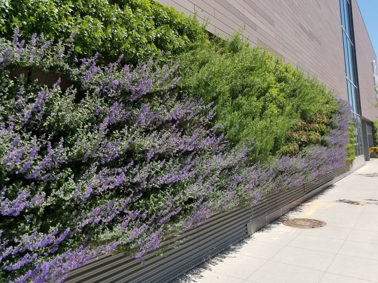 LiveWall Green Wall at Whole Foods Store