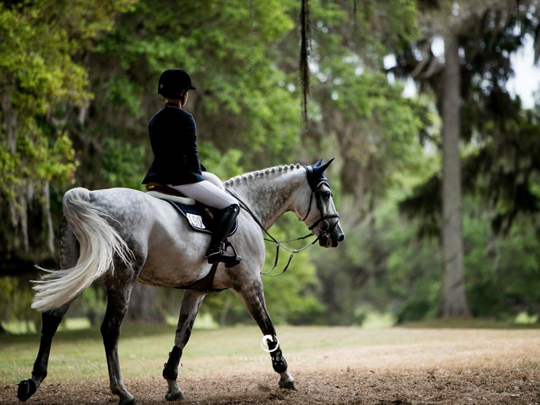 Jenn Gates and Luftikus S at the 2017 Live Oak International Horse Show. Photo by Ashley Neuhof Photography.