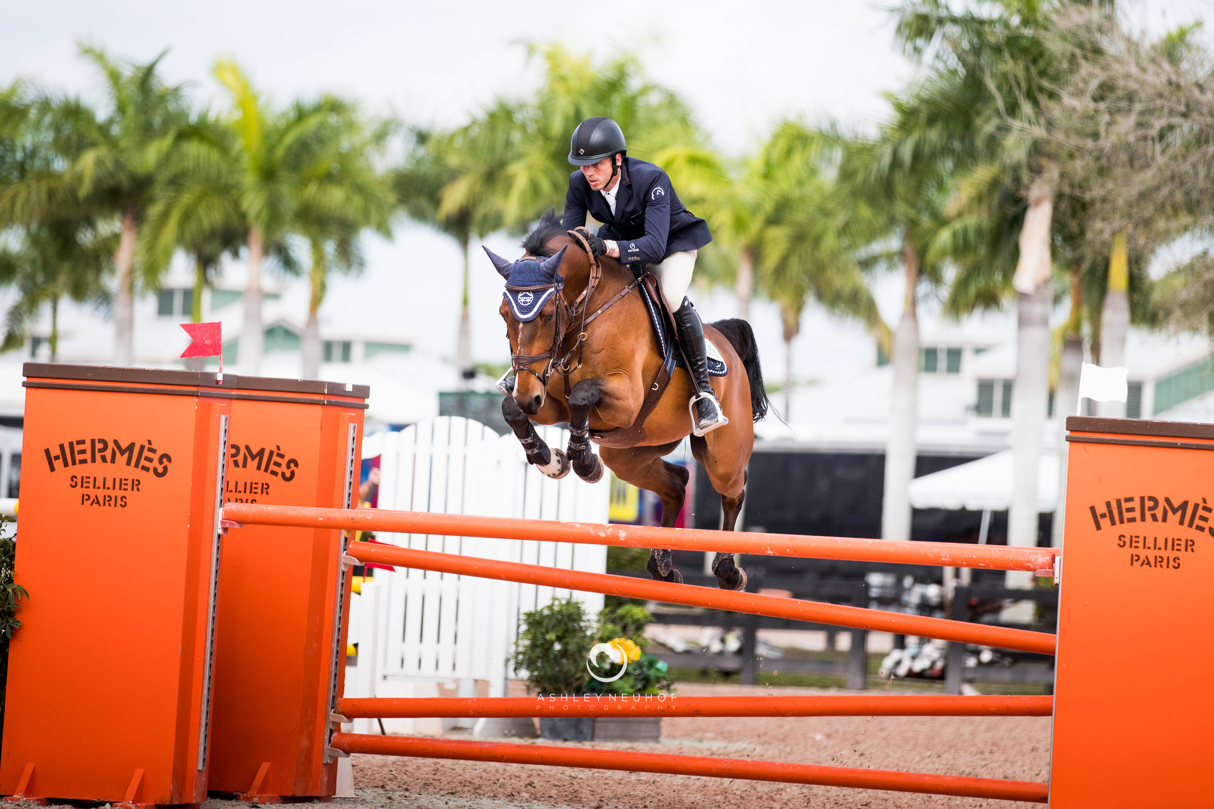 Harrie Smolders and Gotico di ca' San Giorgio at Winter Equestrian Festival 2019. Photo by Ashley Neuhof Photography.