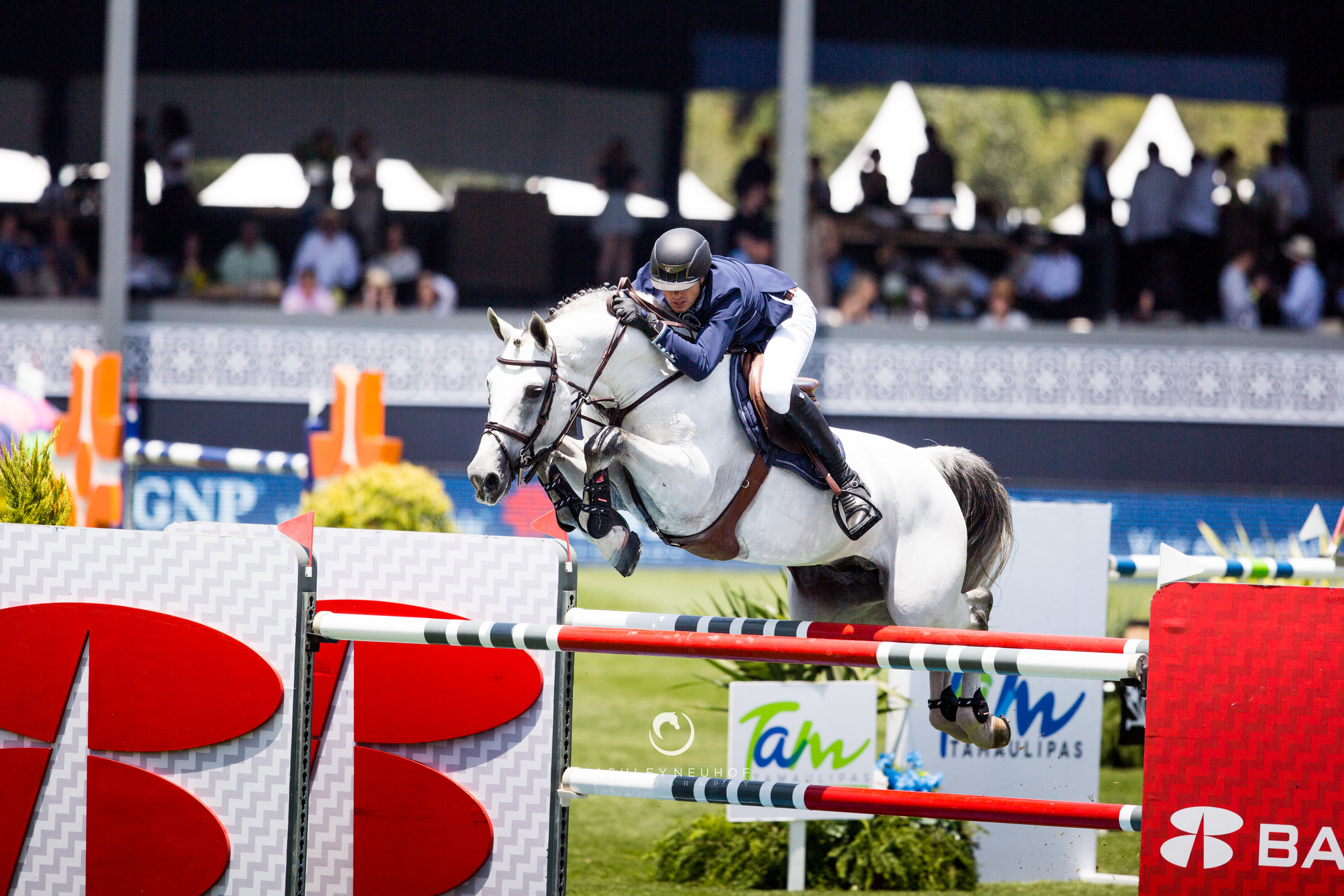 Gregory Wathelet and Mjt Nevados S at Global Champions League of Mexico City 2019. Photo by Ashley Neuhof Photography.