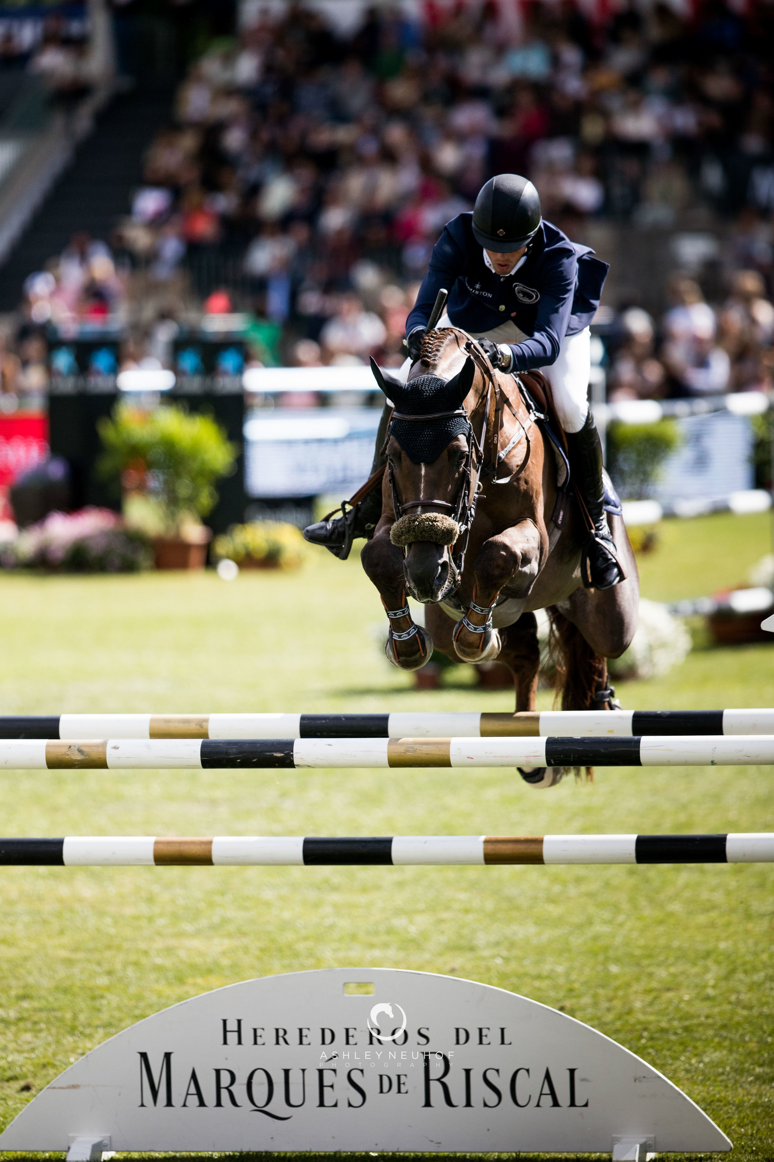 Harrie Smolders and Don VHP Z N.O.P. at Global Champions Tour of Madrid 2019. Photo by Ashley Neuhof Photography.
