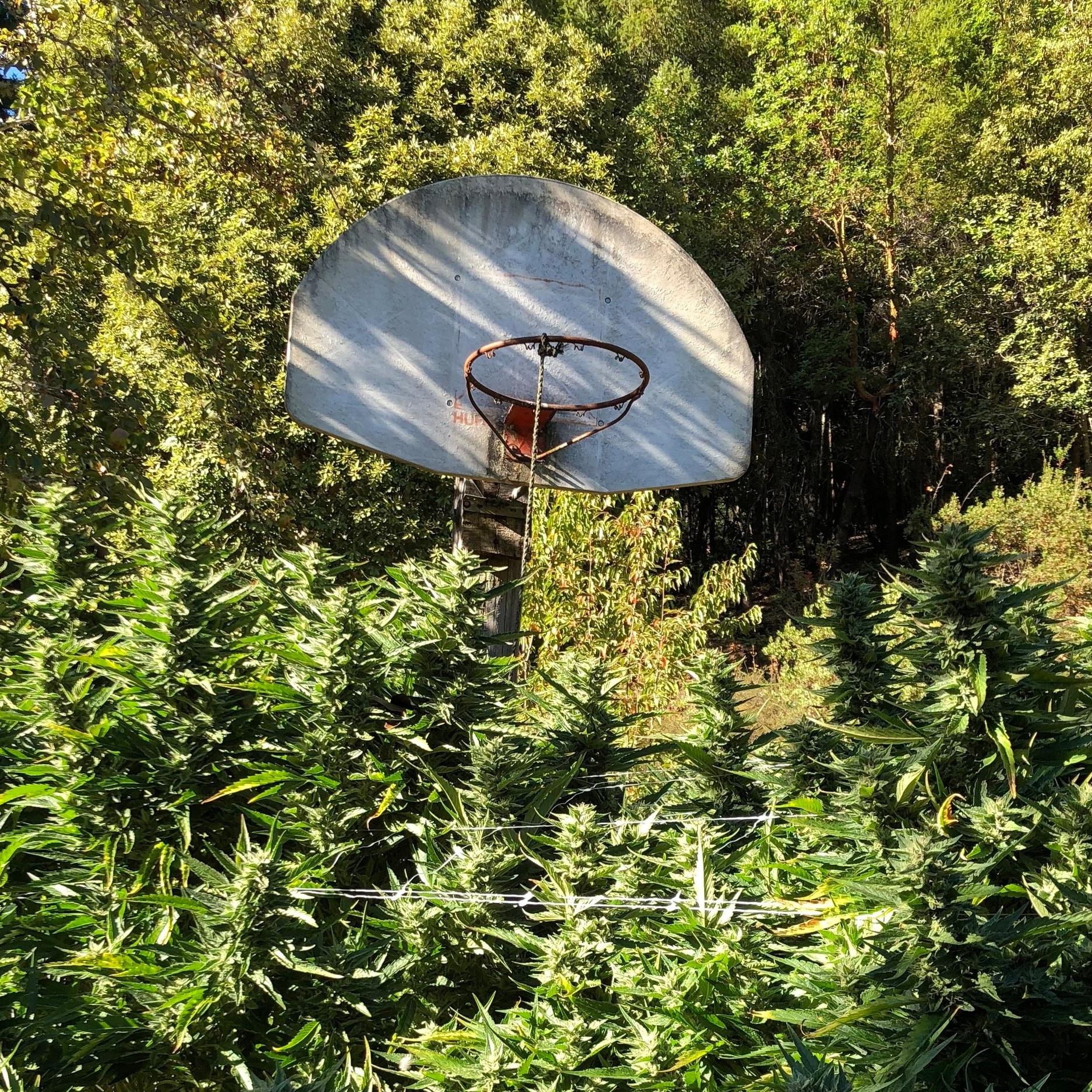 Sweet%2BSisters%2Bbasketball%2B.jpg