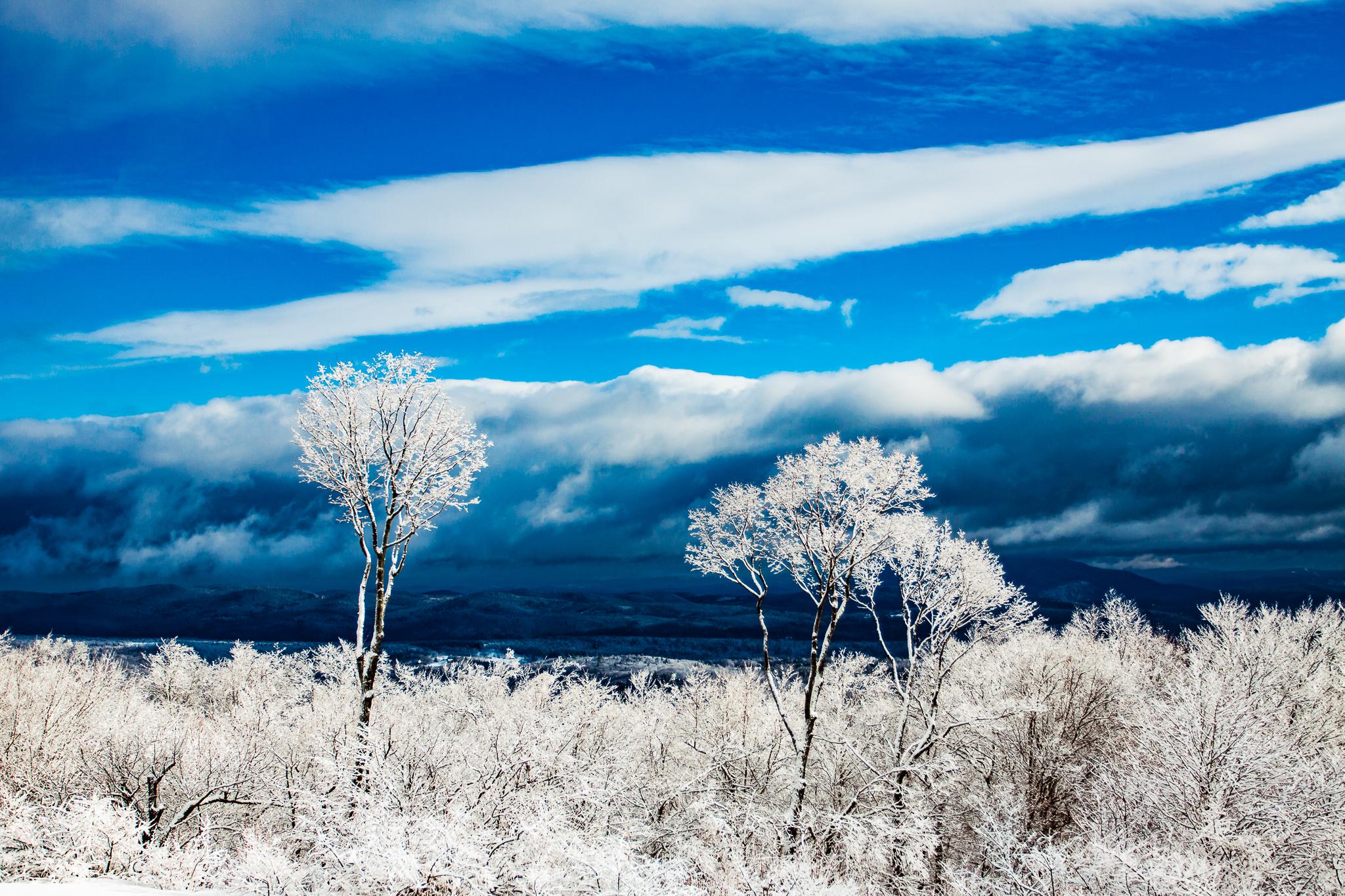 SnowTrees-0664.jpg