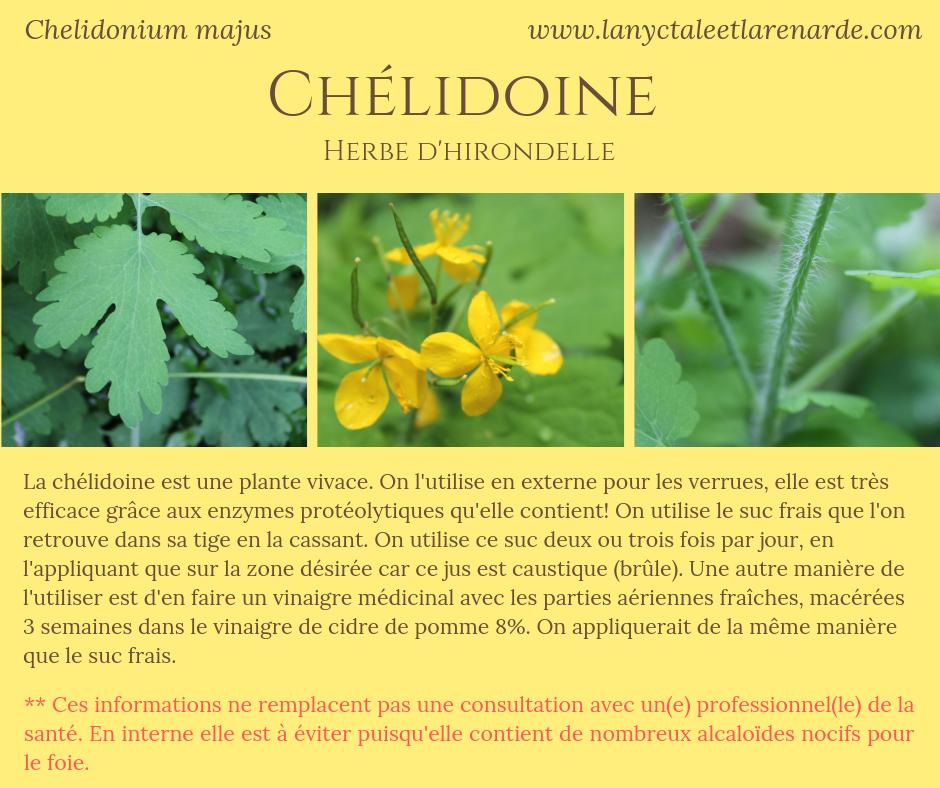 Chélidoine (1).png