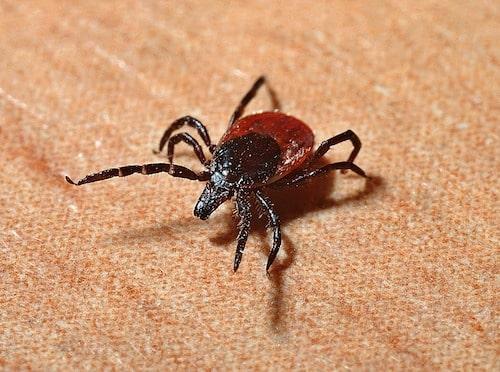 Lyme Disease-min.jpg