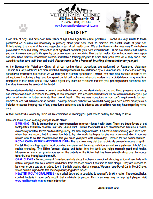 catdentistry.png