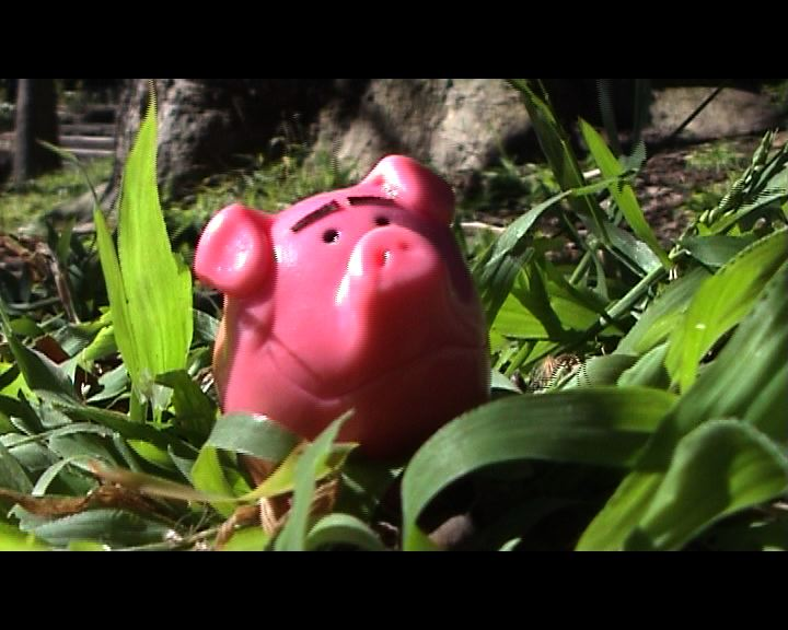 piggy in grass still jpeg.jpg