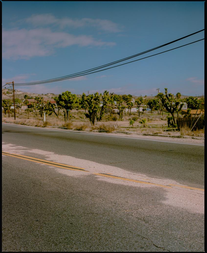 Sandy_Road_Joshua_tree.jpg