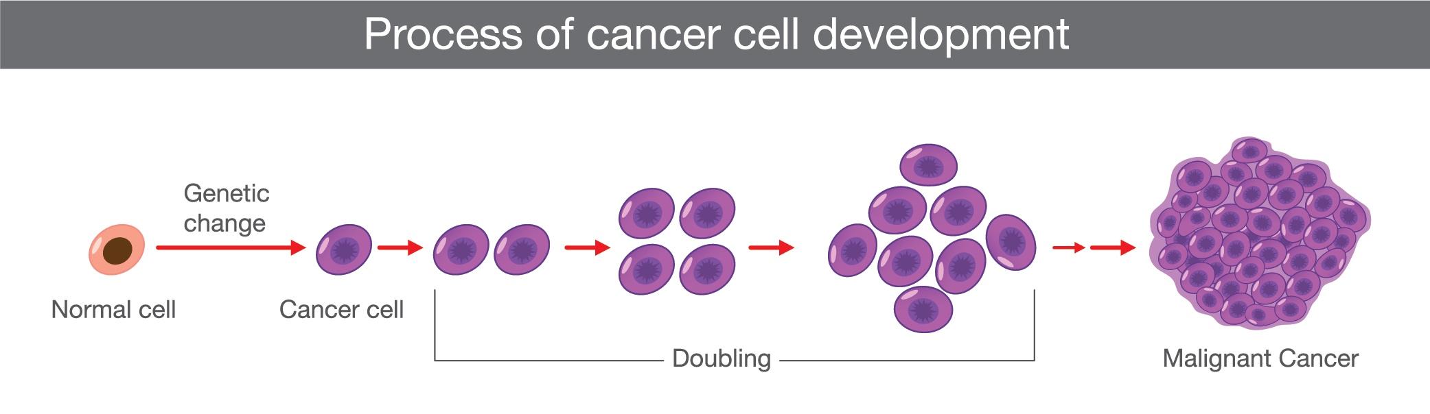 Skin cancer development