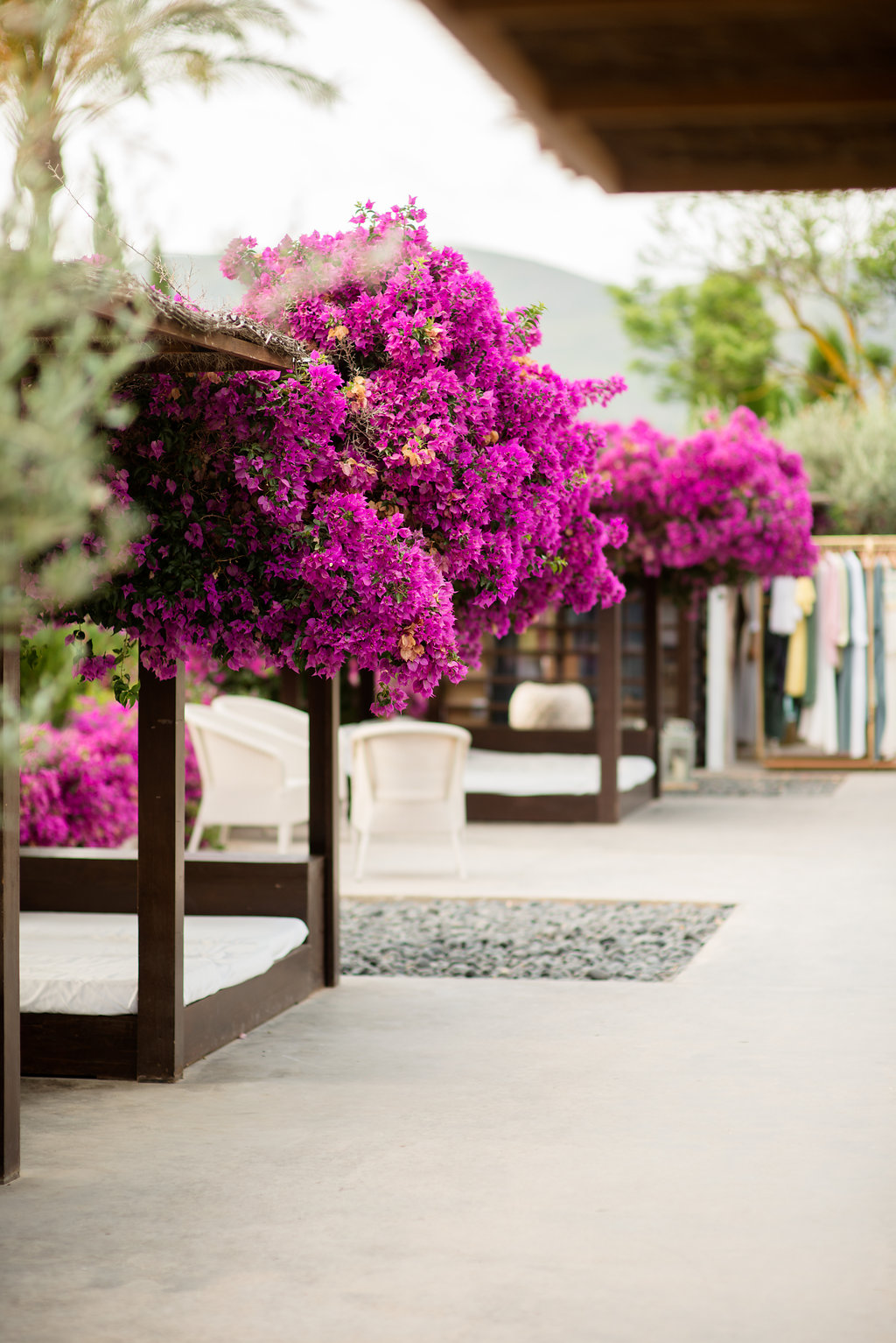 bougainvillea, ibiza events