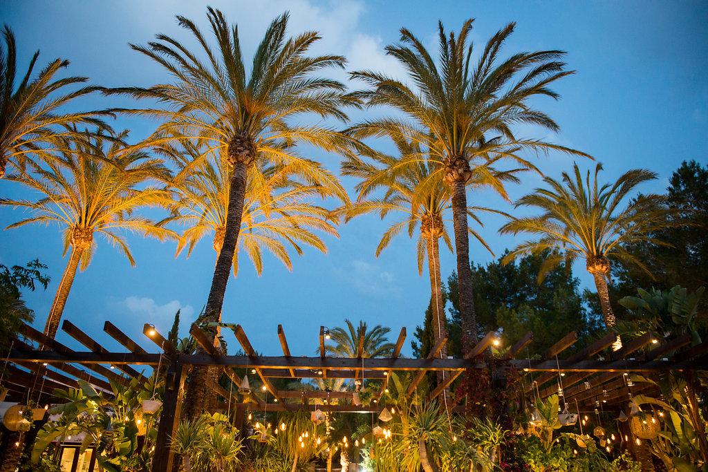 ibiza nights, obi and the island, palm trees