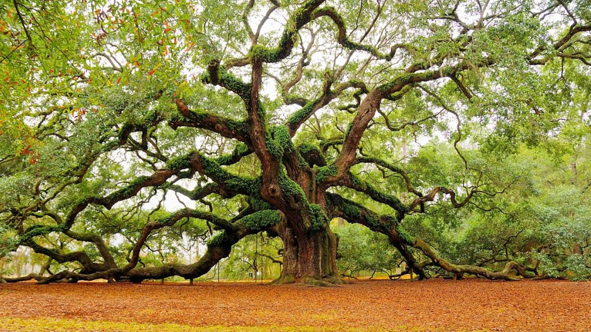 Angel_Oak.jpg