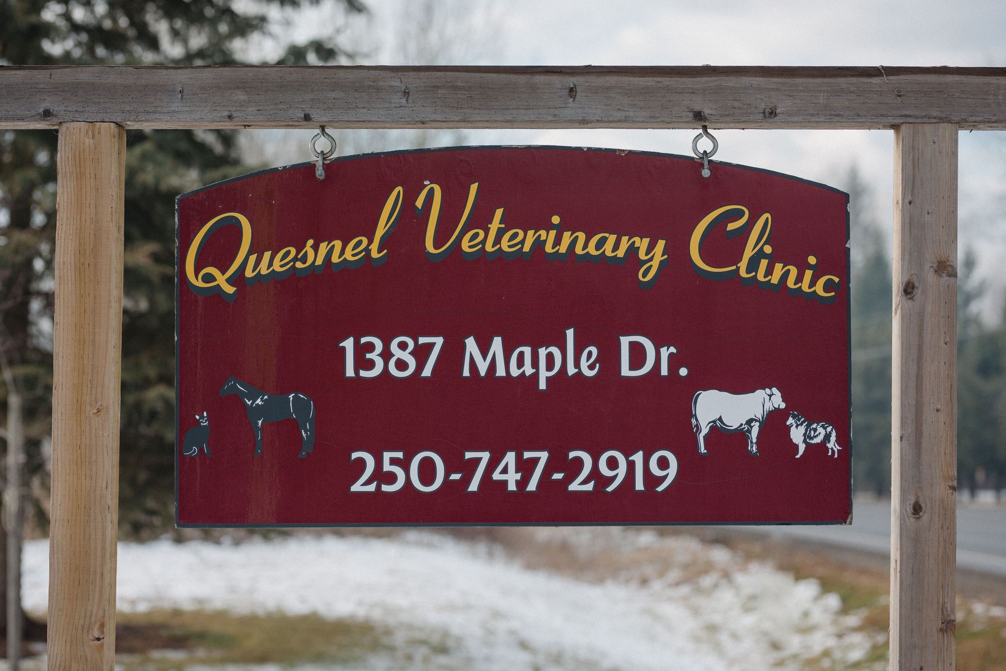quesnel-verterinary-clinic-qvc-quesnel-vets-large-small-animal-clinic-quesnel-bc (32 of 43).jpg