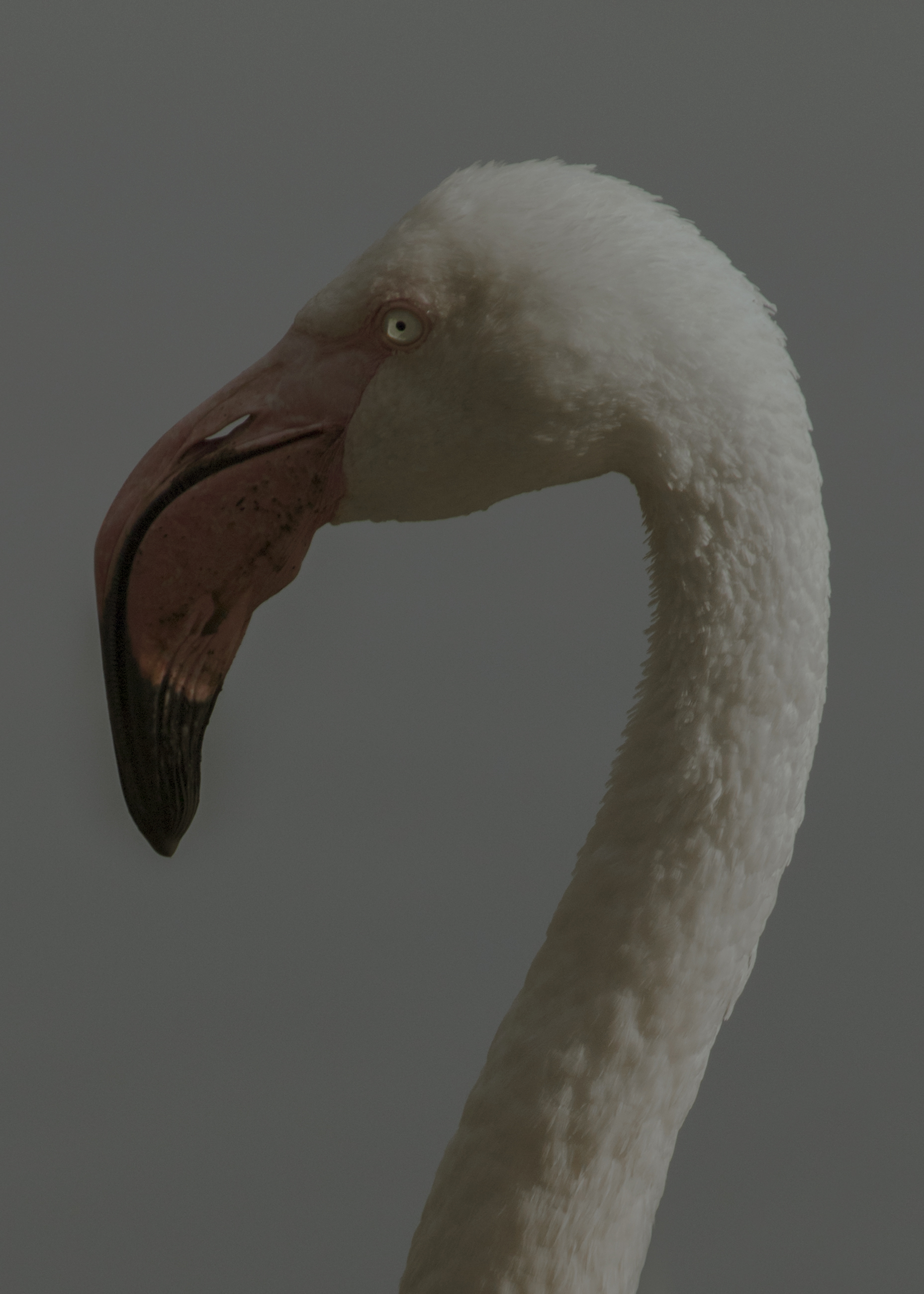 Portraits of Birds