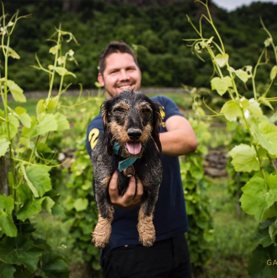 Tamás Kis - Somlói Vándor Winery