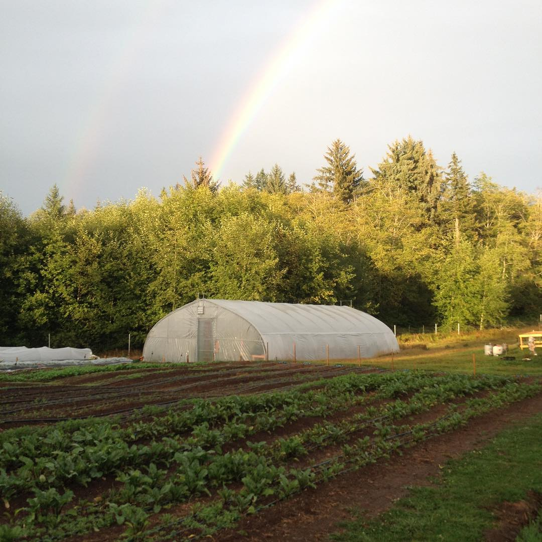 rainbow_greenhouse_2018.jpg