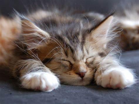 404 Cat.jpg