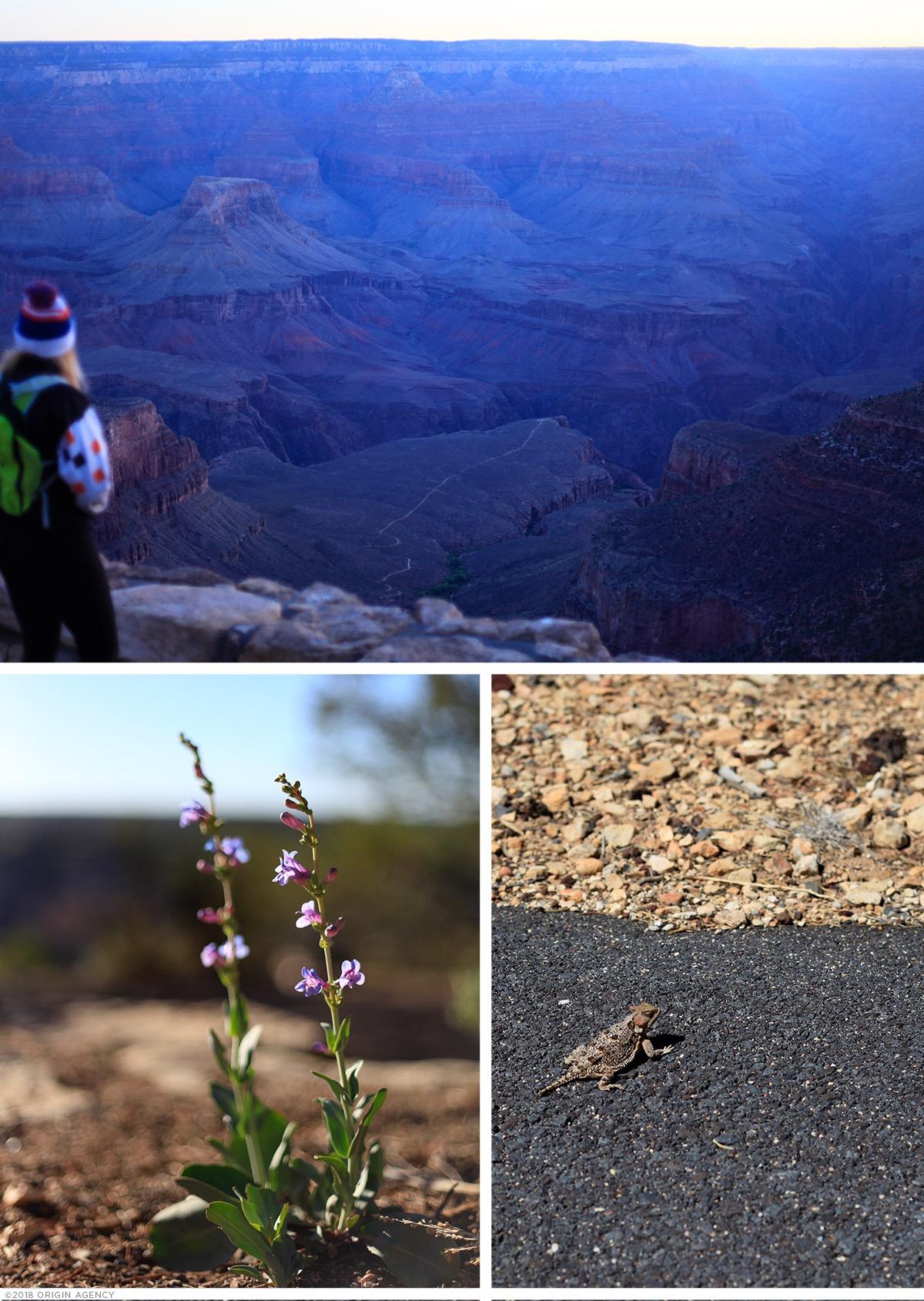 origin-agency-grand-canyon-rim-trail-morning.jpg