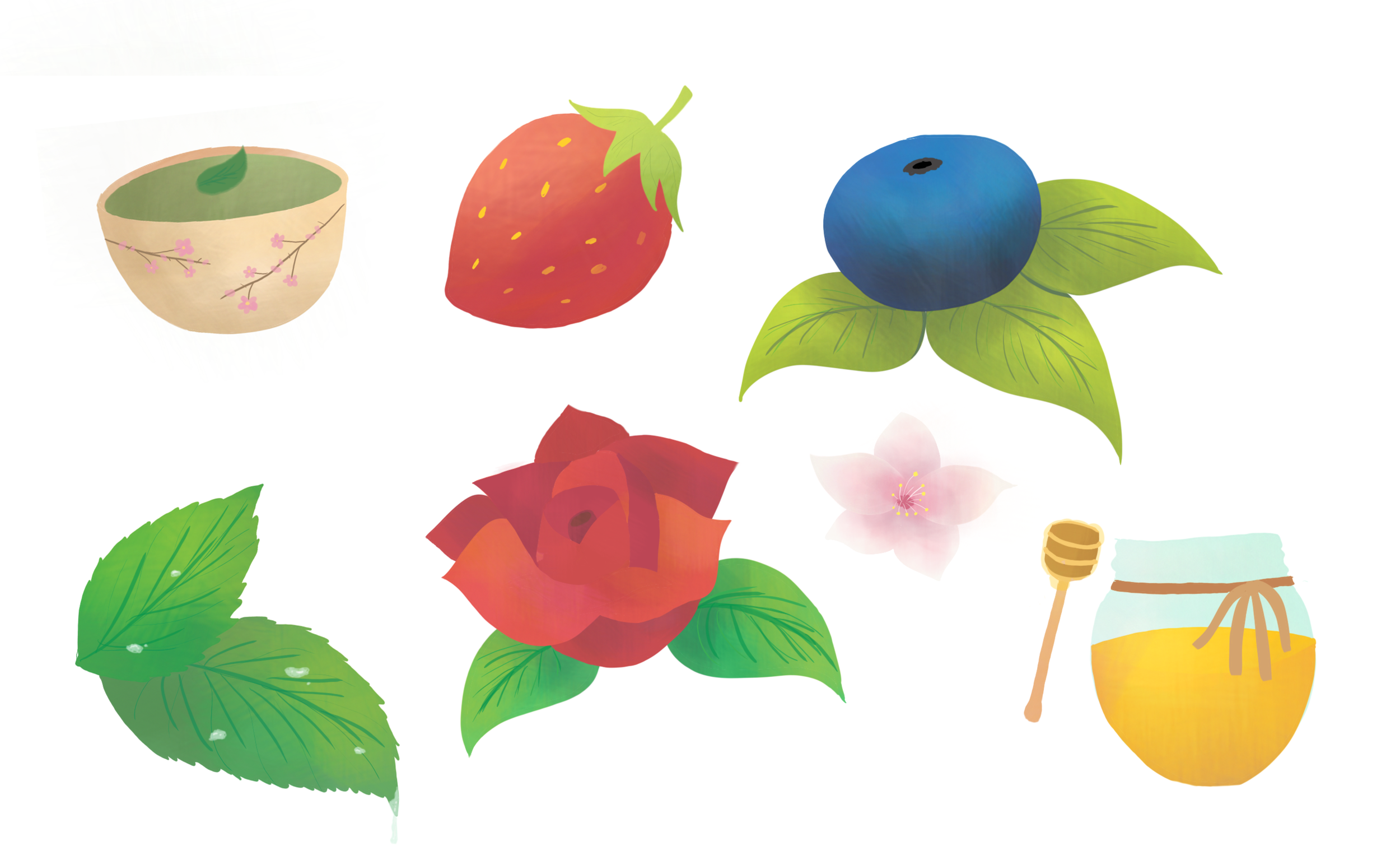 Illustrations for tea packaging for client