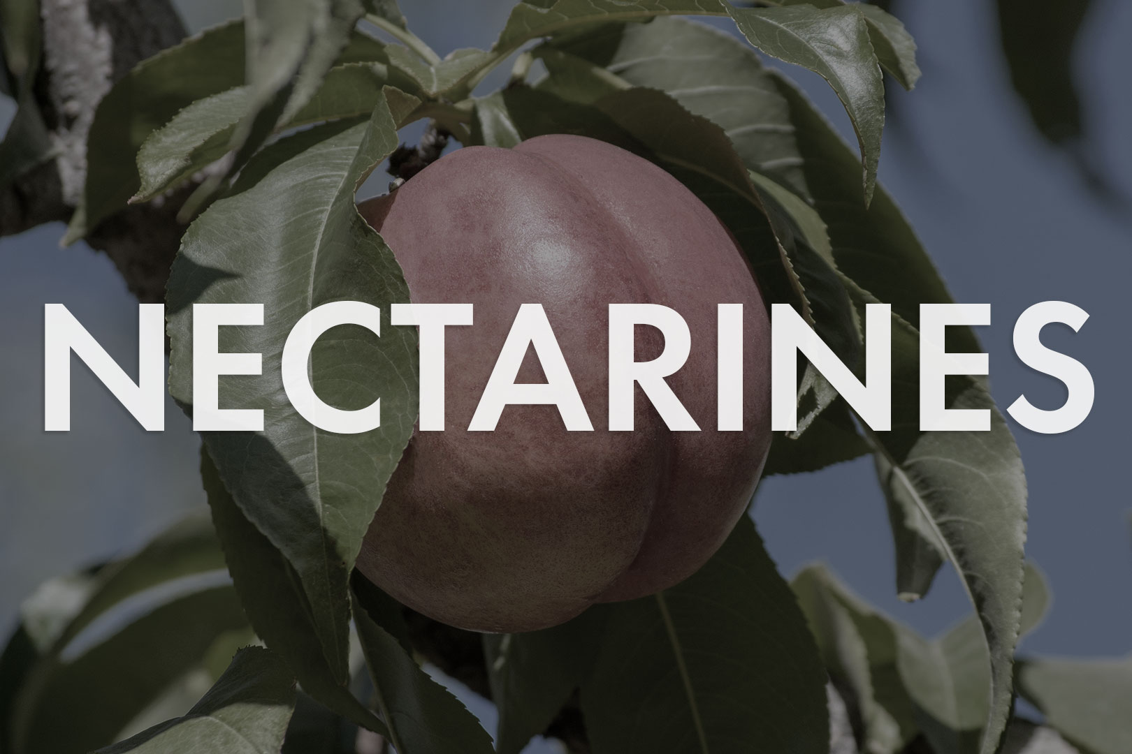 VWN-Web-Inventory_Thumnails-Nectarines.jpg