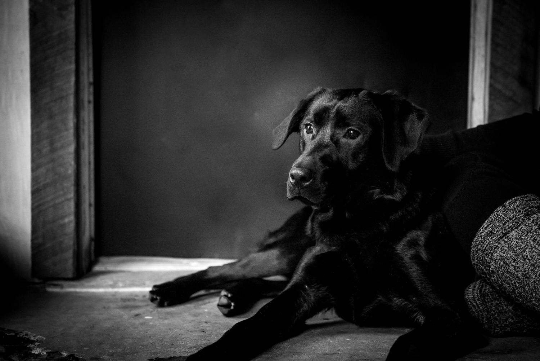 Dog-Portrait-Photography-Kamloops-3991.jpg