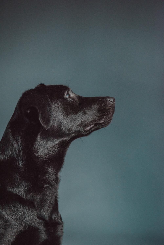 Dog-Portrait-Photography-Kamloops-4036.jpg