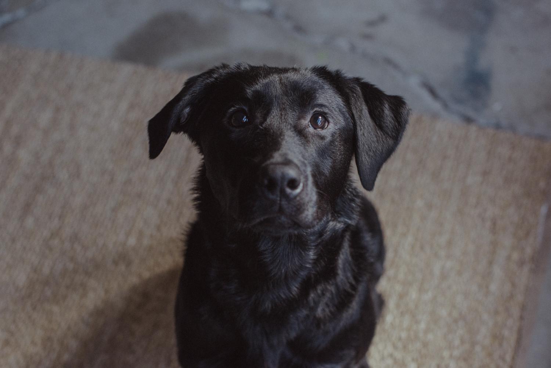 Dog-Portrait-Photography-Kamloops--2.jpg