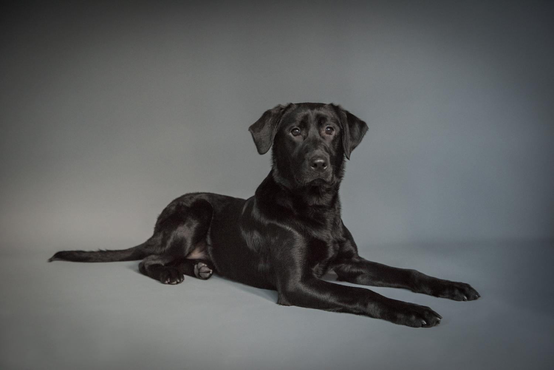 Dog-Portrait-Photography-Kamloops-.jpg