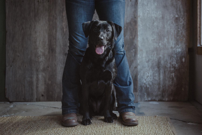 Dog-Portrait-Photography-Kamloops-4150.jpg