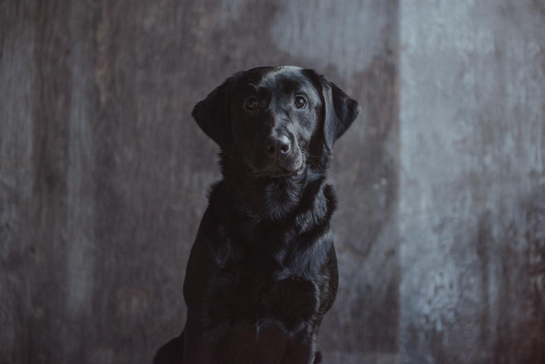 Dog-Portrait-Photography-Kamloops--3.jpg