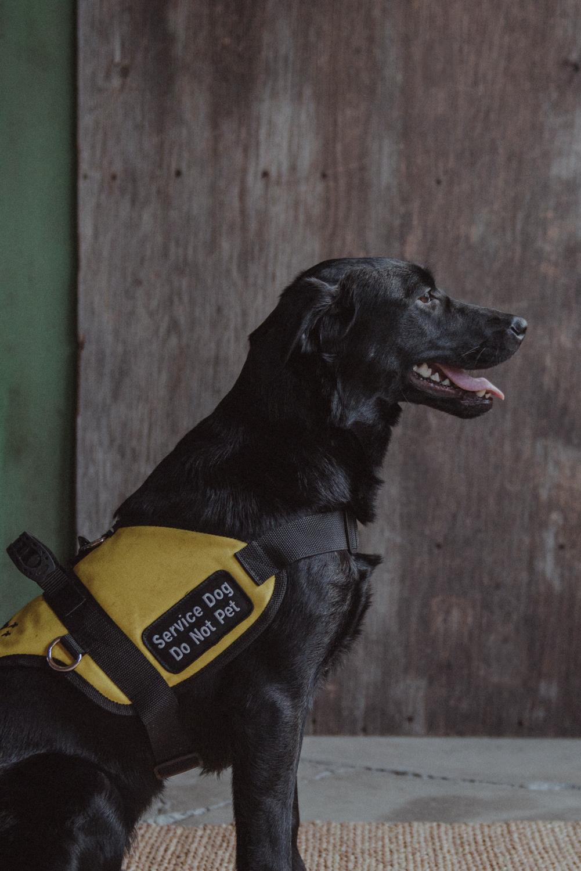 Dog-Portrait-Photography-Kamloops--4.jpg