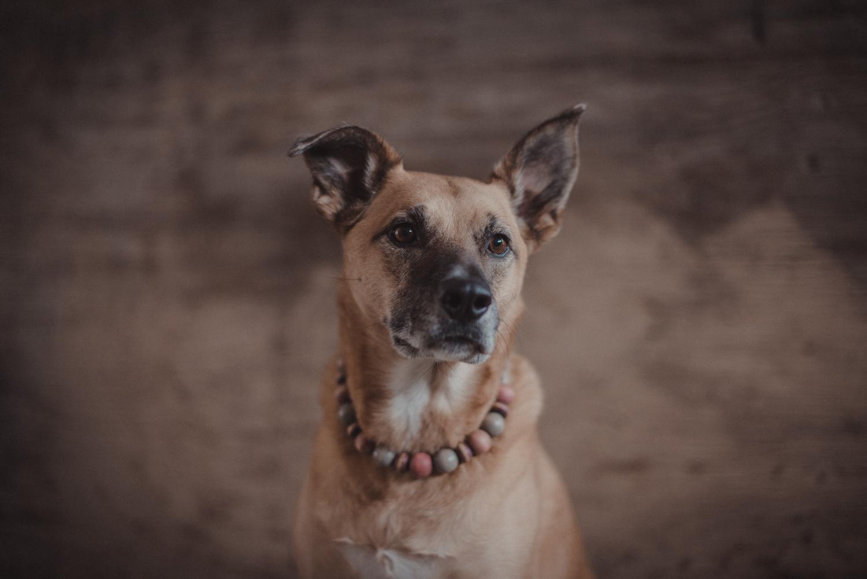 Dog-Portrait-Photography-Kamloops-4915.jpg