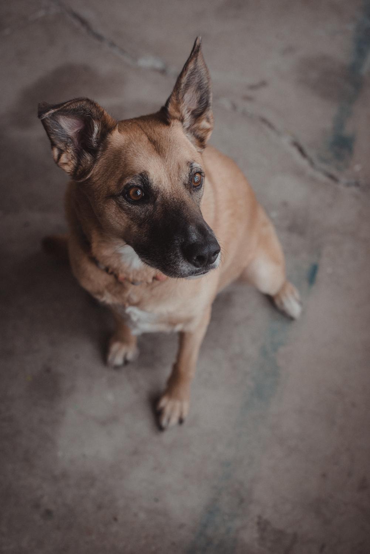 Dog-Portrait-Photography-Kamloops-4950.jpg