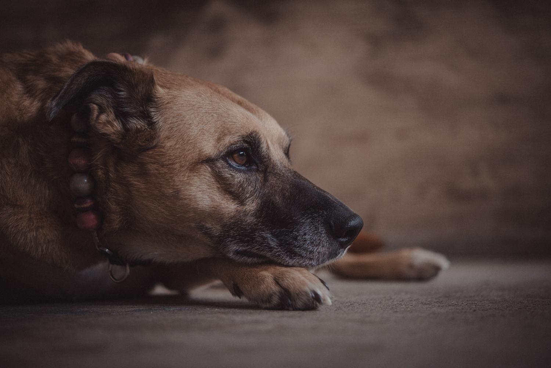 Dog-Portrait-Photography-Kamloops-4925.jpg