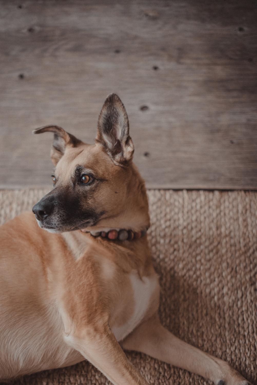 Dog-Portrait-Photography-Kamloops-4962.jpg