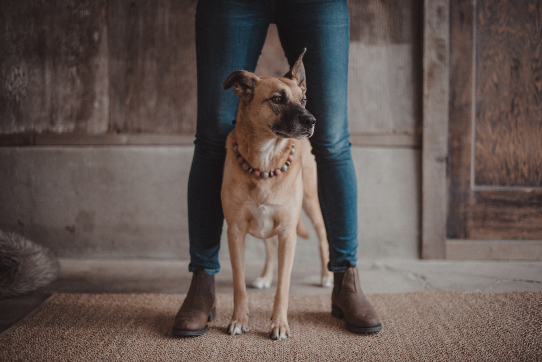 Dog-Portrait-Photography-Kamloops-4977.jpg