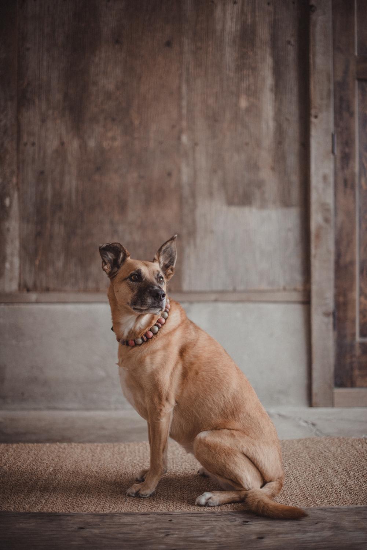 Dog-Portrait-Photography-Kamloops-4999.jpg