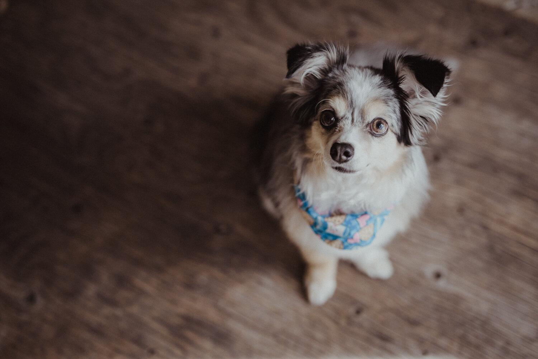Kamloops-Dog-Portrait-Photography-2.jpg
