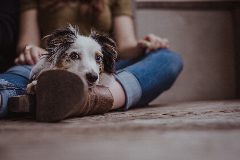 Kamloops-Dog-Portrait-Photography-4.jpg