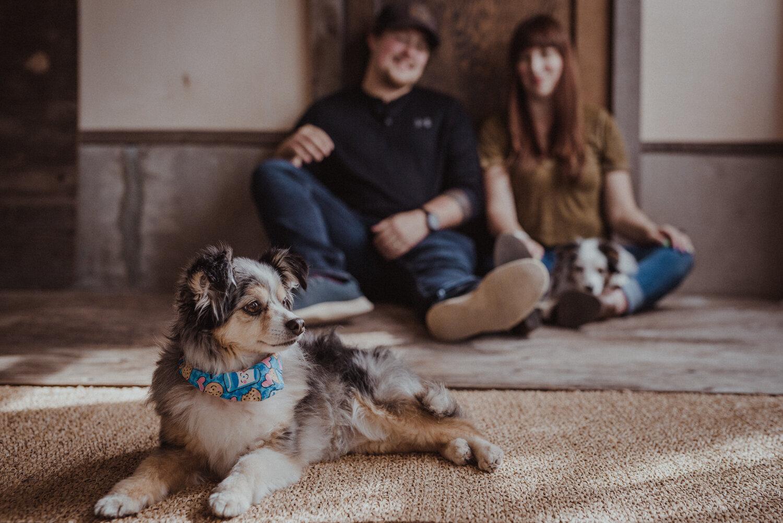 Kamloops-Dog-Portrait-Photography-3.jpg