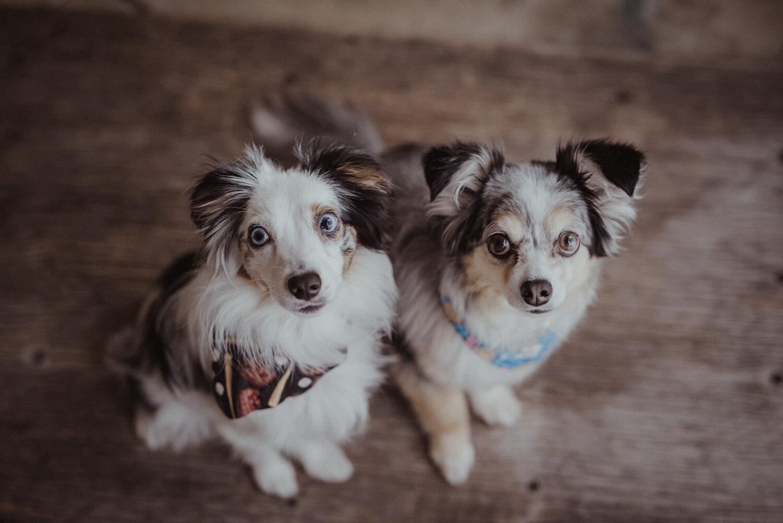 Kamloops-Dog-Portrait-Photography-5.jpg