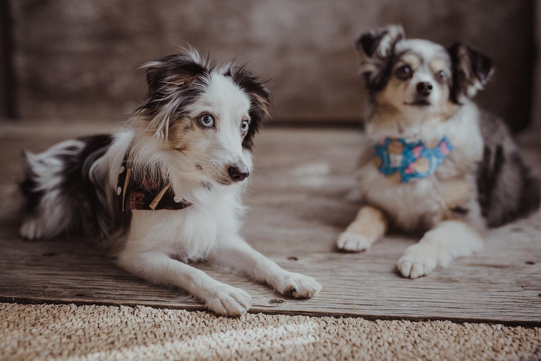 Kamloops-Dog-Portrait-Photography-6.jpg