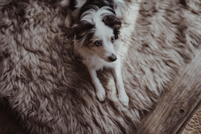 Kamloops-Dog-Portrait-Photography-7.jpg