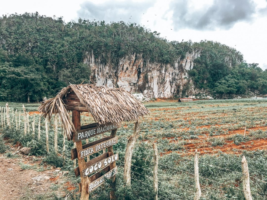 vinales-cuba-tobacco-plantations-