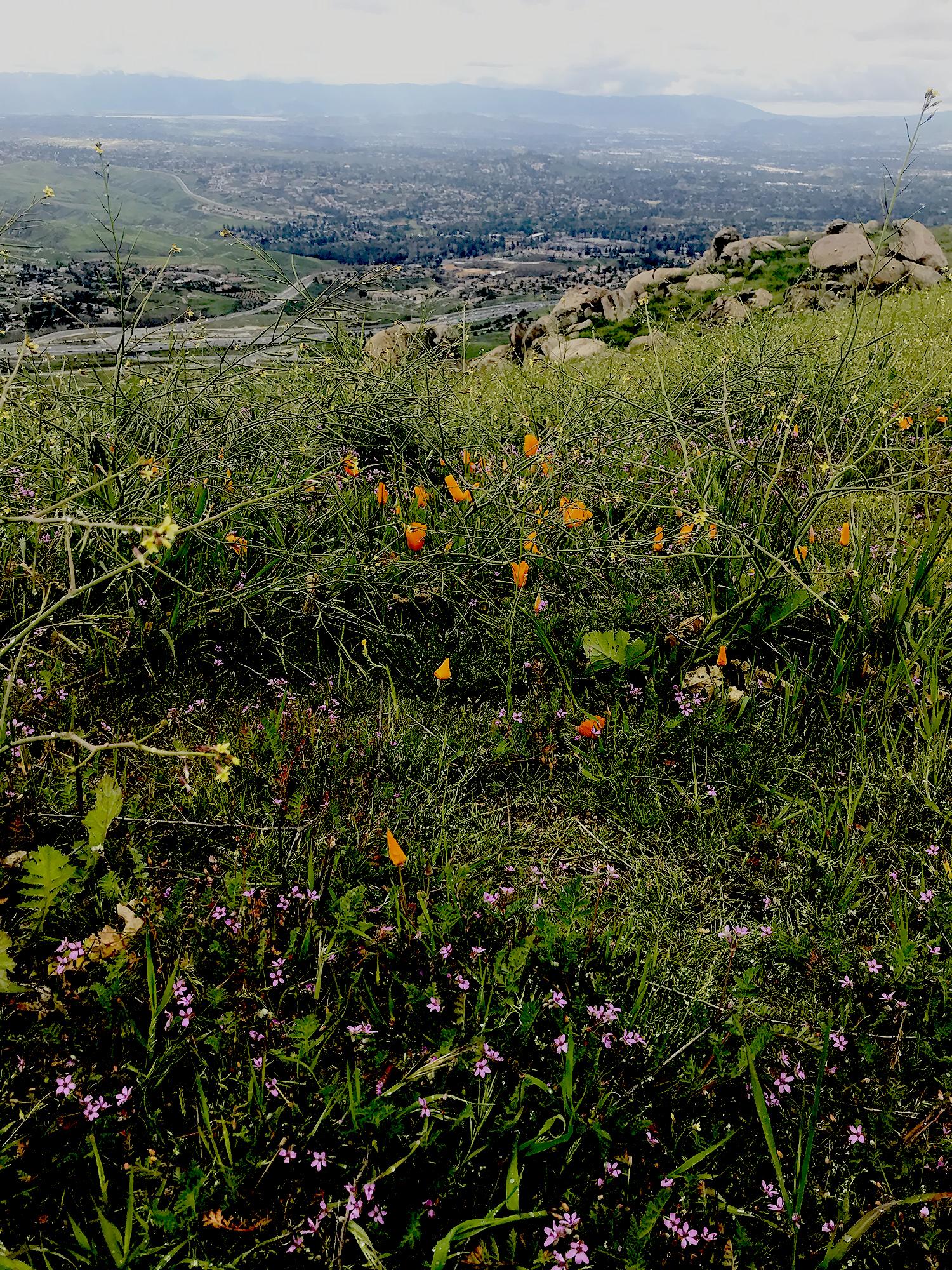 Box Springs Mountain Park Moreno Valley CA10.jpg