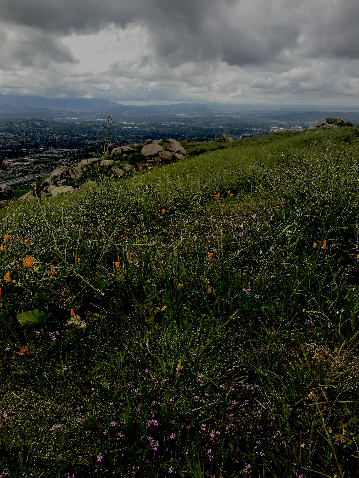 Box Springs Mountain Park Moreno Valley CA9.jpg