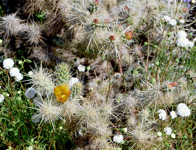 Anza-Borrego Desert State Park 2.JPG