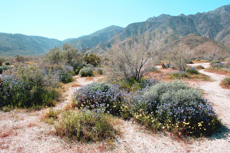 Anza-Borrego Desert trails.JPG