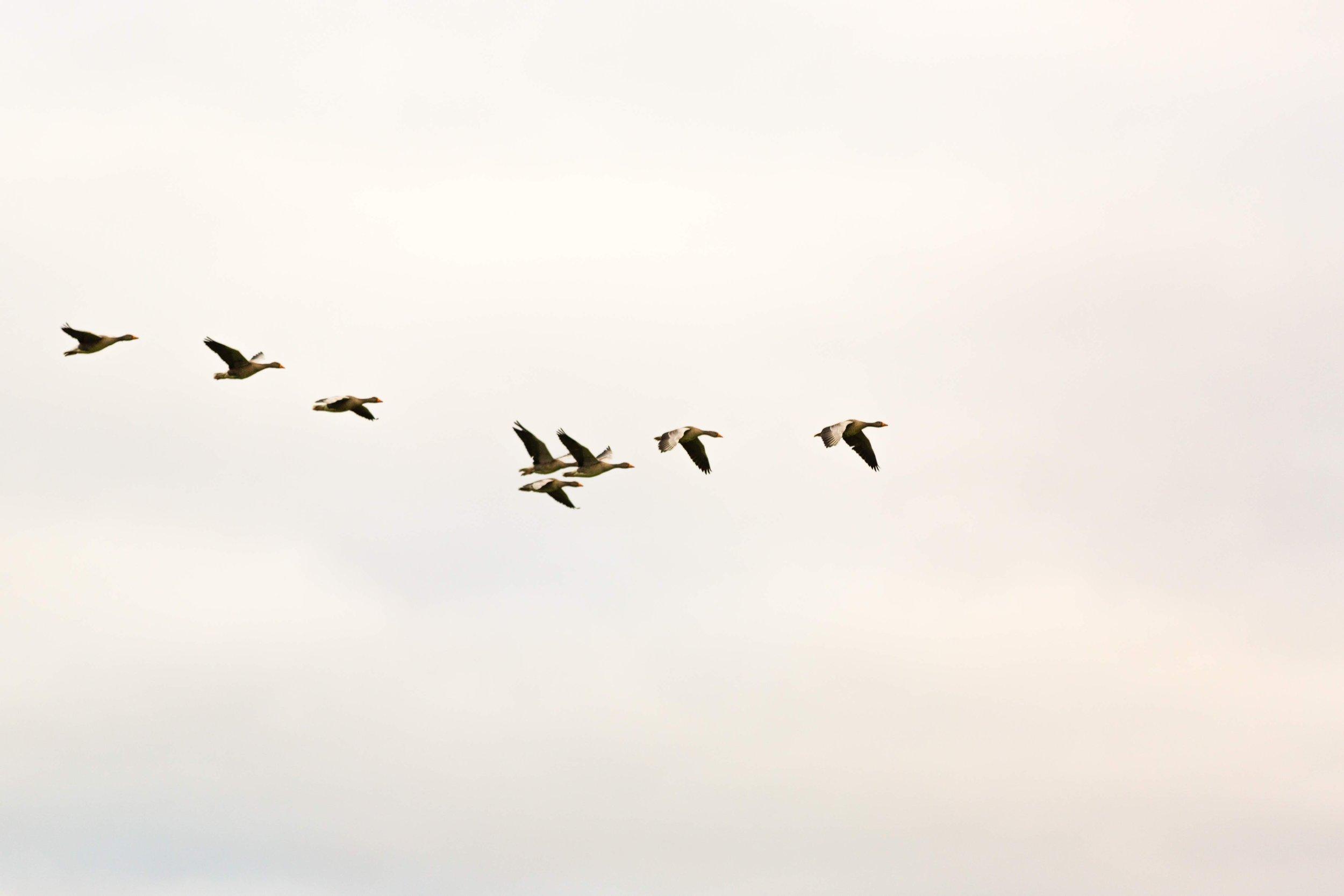 animal-animal-photography-flight-1721675.jpg