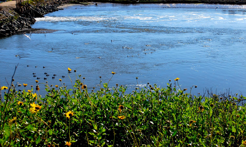 Bolsa Chica  water birds.JPG